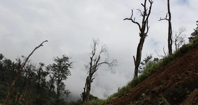 Trồng bù rừng ở Hà Giang: Doanh nghiệp phớt lờ, nợ phí gần 21 tỷ đồng