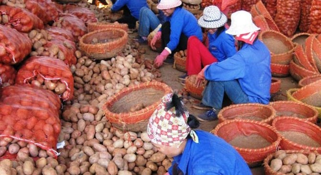 """Tràn lan nông sản Trung Quốc gắn mác """"made in Viet Nam"""""""