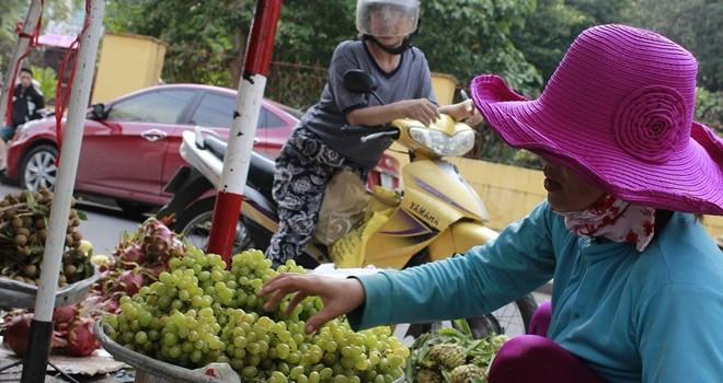 Khóc với nho đặc sản Ninh Thuận 3.000 đồng/kg