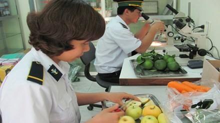 Lo ngại hoa quả trái vụ nhập ồ ạt