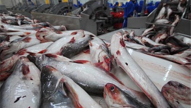Luật giám sát cá tra Việt Nam: Quy định của Mỹ có đúng chuẩn?