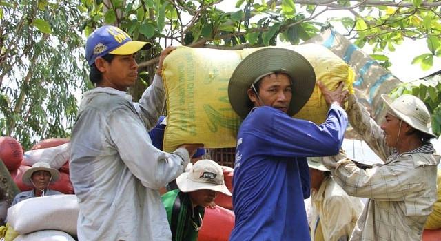Thách thức bủa vây sản xuất nông sản