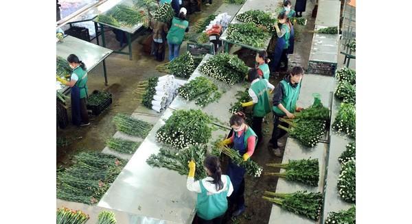 """Đầu tư vào nông nghiệp Việt Nam: """"Hiện tượng"""" Nhật Bản!"""