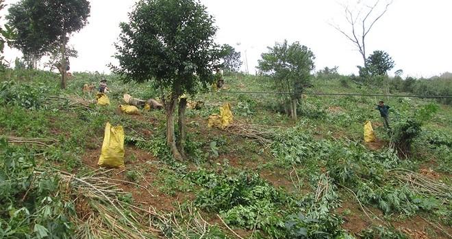 Nông sản đi cáp treo tự chế ở miền tây Quảng Trị