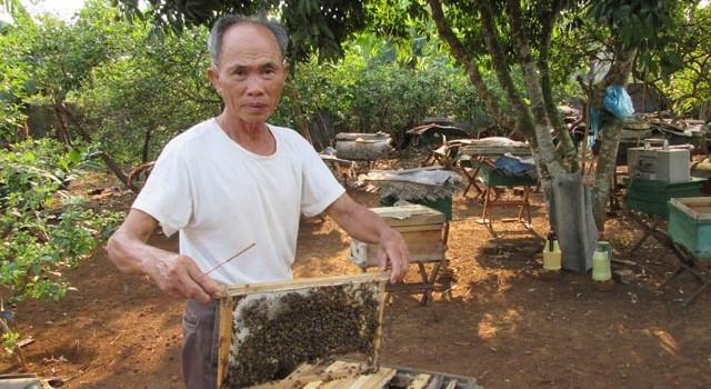 Trúng mùa mật ong nhờ học nghề