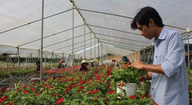 8x trồng hoa treo, thu lãi 1,5 tỷ đồng/năm