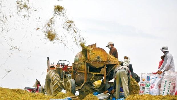 Hạt gạo Việt giữa vòng quay hội nhập