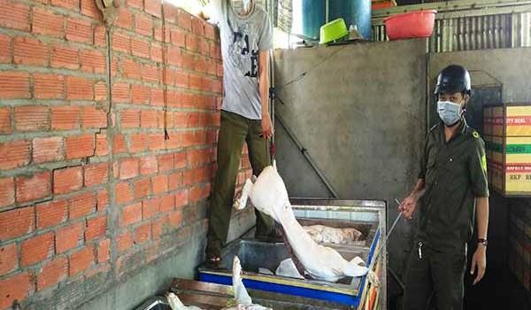 Phát hiện cơ sở tàng trữ 2,5 tấn thịt heo thối