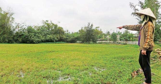 Nghệ An: Nông dân bỏ ruộng tràn lan