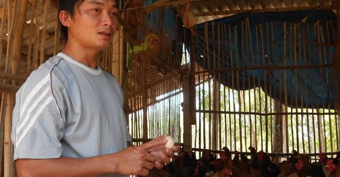 Tự tạo cơ hội: Làm giàu từ gà quê