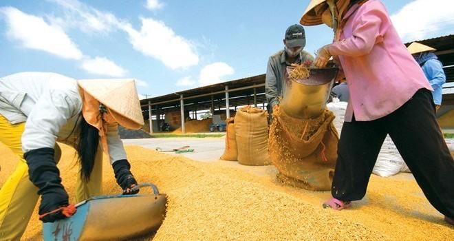 Gạo Việt mập mờ ở Trung Quốc, bát nháo nội địa