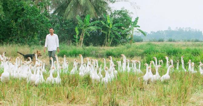 Tự tạo cơ hội: Khởi nghiệp từ 20 con ngỗng
