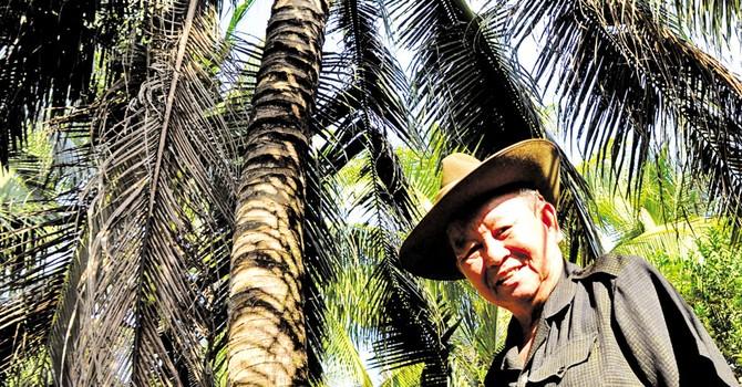 Đại tướng trồng dừa