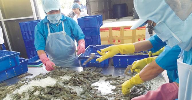 Dùng chất cấm trong thủy sản: Hám lợi trước mắt, trả giá dài lâu