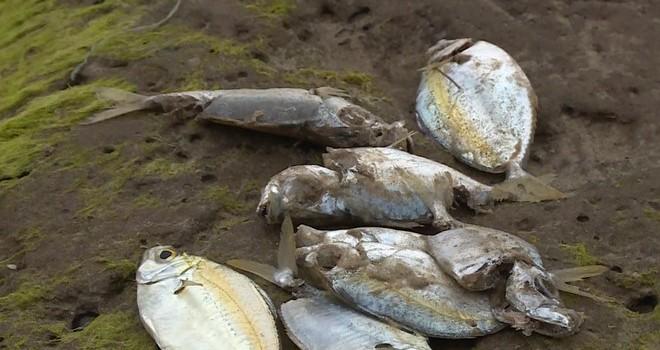 """Cá chết ven biển miền Trung: """"Tình hình rất nghiêm trọng"""""""