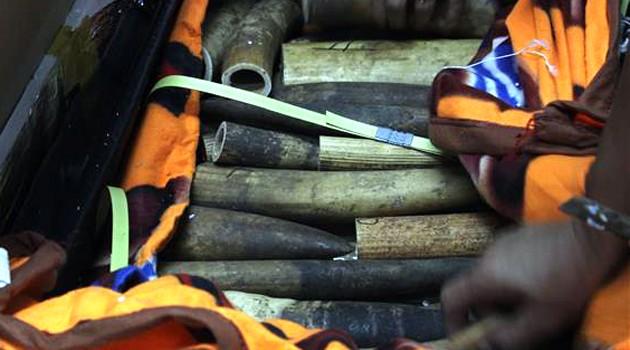 Thu hơn 100 khúc ngà voi ở sân bay Nội Bài