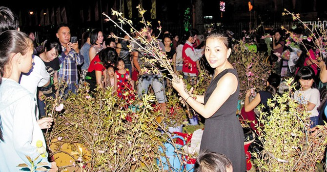 Tranh nhau lấy hoa đào dù ban tổ chức van xin