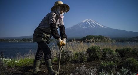 Nhật Bản dùng robot thay nông dân già để đảm bảo lương thực