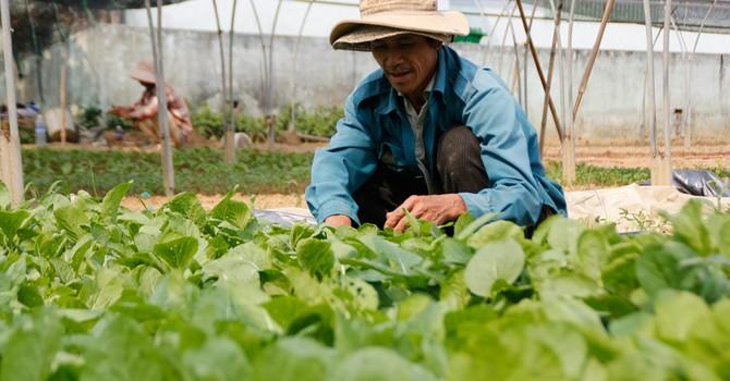 Triệu người Đà Nẵng lo nguồn rau không an toàn