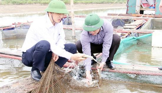 Chủ tịch UBND tỉnh kiểm tra, chỉ đạo khắc phục sự cố cá chết