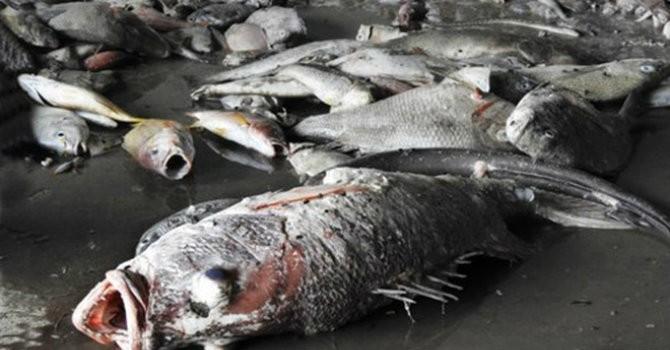 Vụ cá chết hàng loạt: Khủng hoảng truyền thông qua các con số