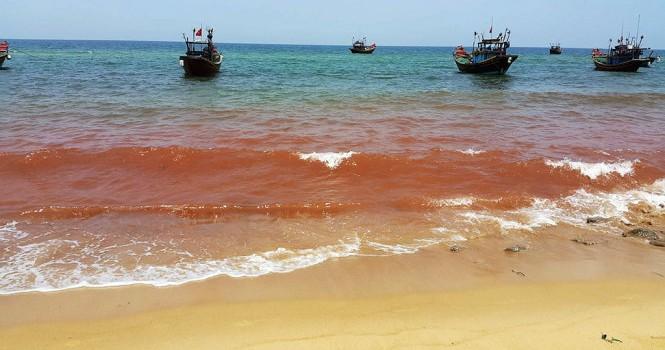 Quảng Bình: Xuất hiện nước biển màu đỏ, cá vẫn tiếp tục chết dạt vào bờ