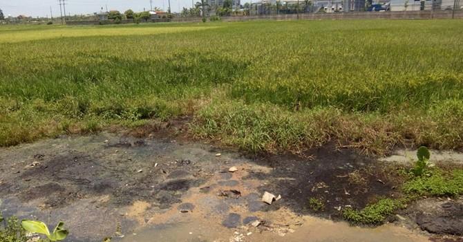 Tuồn chất thải công nghiệp vào ruộng