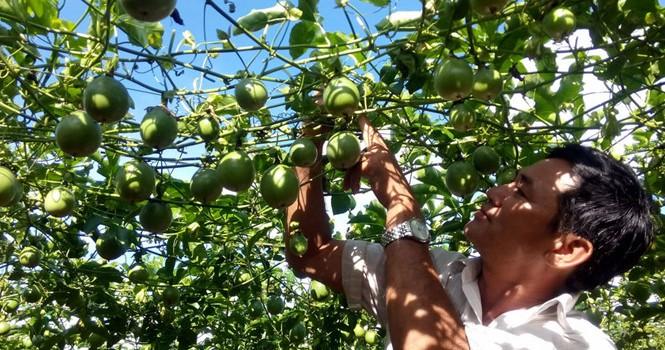 Tự tạo cơ hội: Thu nhập cao nhờ trồng luân canh
