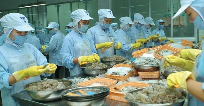 Doanh nghiệp lo mất thị trường vì kháng sinh