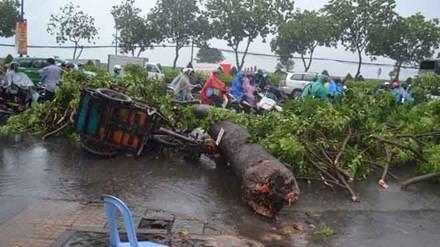 Cây xanh ngã hàng loạt sau mưa, đè người đi đường bị thương