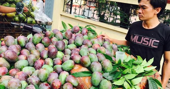 Xoài lạ tím bầm được bày bán tại Hà Nội