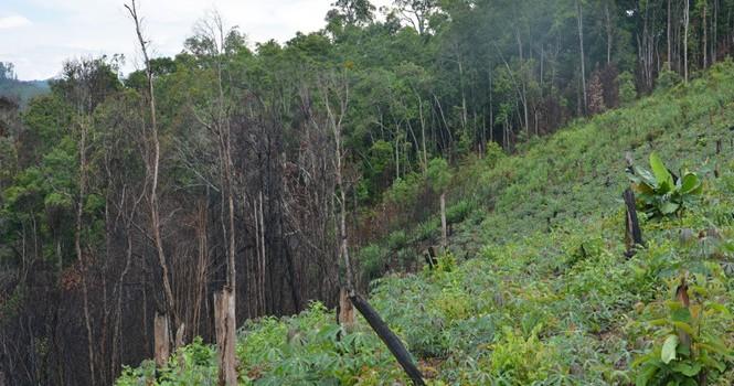 """Gần 1.700 ha đất rừng """"biến mất"""" trước mũi các ban quản lý"""