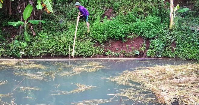 Tôm cá chết bất thường dọc đầu nguồn sông Đà
