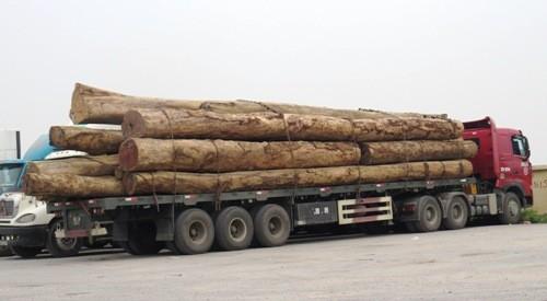 """Xe chở gỗ """"khủng"""" tháo chạy trước mặt lực lượng chức năng"""