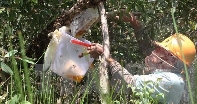 85% mật ong đặc sản tại Cà Mau bị pha chế thêm nước đường