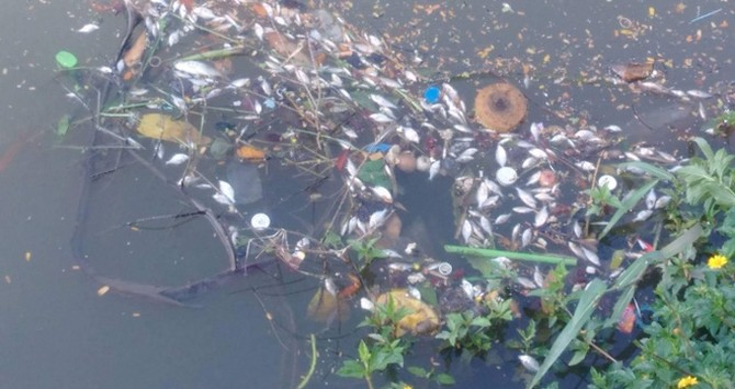 Huế: Cá bất ngờ nổi dày đặc trên sông An Cựu