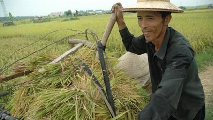 Xuất khẩu gạo hàng đầu thế giới, nông dân vẫn nghèo: Sẽ giảm trồng lúa