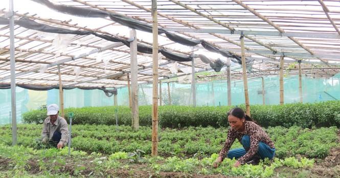 Tự tạo cơ hội: Từ trồng lúa chuyển sang rau sạch