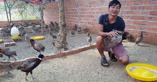 Tự tạo cơ hội: Sống khỏe nhờ nuôi chim trĩ đỏ