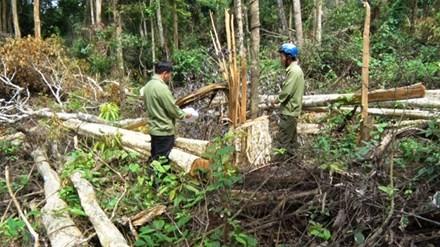 Cán bộ mua bán đất rừng nhận khoán!