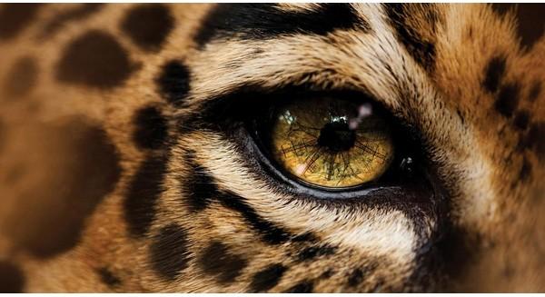 """Những mùa săn không hồi kết, Amazon đang """"chảy máu"""" vì ngành thời trang tàn nhẫn"""