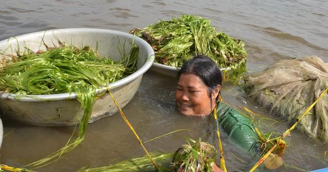 Người dân miền Tây lặn ngụp dưới nước lũ kiếm tiền chục triệu
