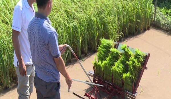 Anh nông dân Thái Bình chế tạo máy cấy lúa không động cơ 