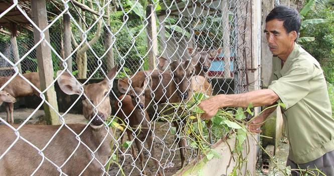 Tự tạo cơ hội: Kiếm tiền từ nuôi nhím, hươu, nai