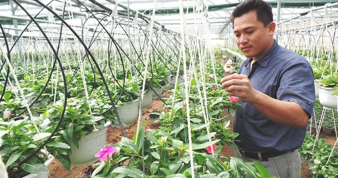 """Tự tạo cơ hội: """"Chuyên gia"""" hạt giống về trồng hoa treo"""