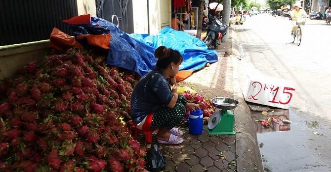 Thanh long đổ đống ở Sài Gòn: 1 vốn 14 lời!
