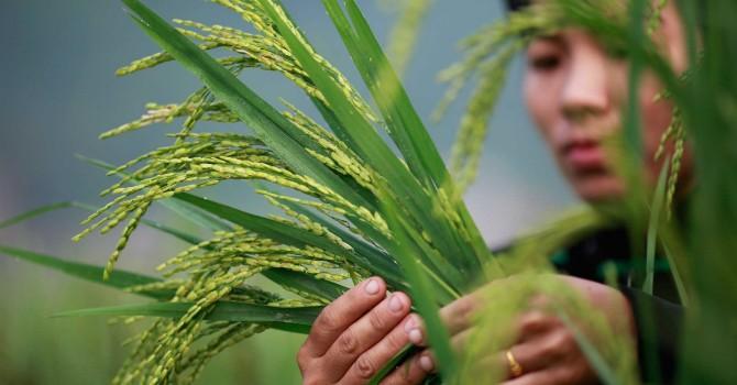 Đề nghị Trung Quốc tăng xả lũ cấp nước cho đồng bằng sông Cửu Long