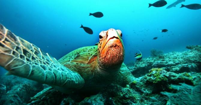 """Trung Quốc gọi đảo nhân tạo hủy hoại san hô Biển Đông là """"dự án xanh"""""""