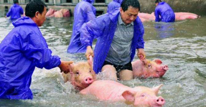 Lũ lụt cuốn bay 33 tỷ USD của Trung Quốc chỉ trong 1 tháng