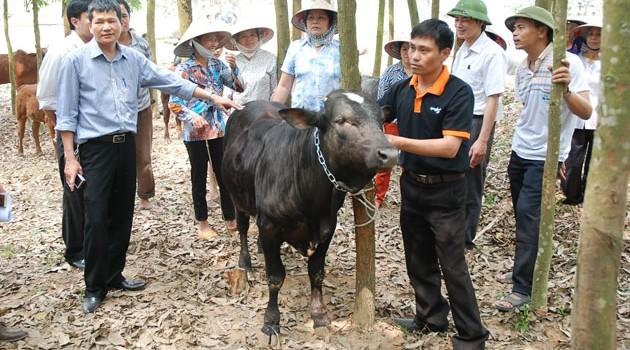 Công ty Giống gia súc Hà Nội sắp IPO